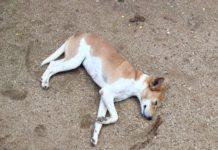 Sri Lanka: Dogs, Cats and a Holiday