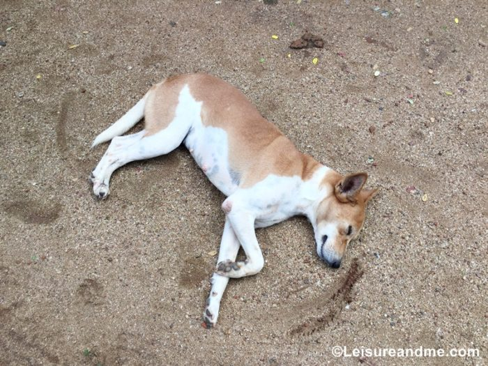 Sri Lanka: Dogs, Cats and a Holiday