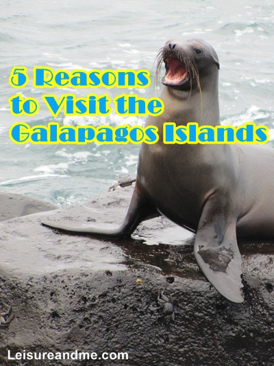 5 Reasons to Visit the Galapagos Islands
