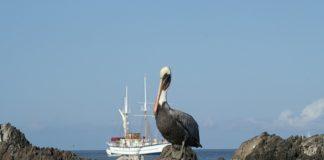 Reasons to Visit the Galapagos Islands