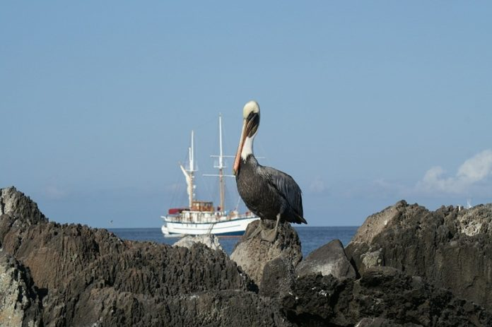 Reasons to Visit the Galapagos Islands