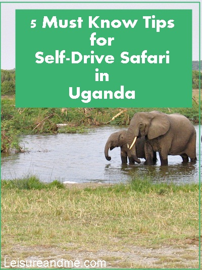 5 Must Know Tips for Self-Drive Safari in Uganda