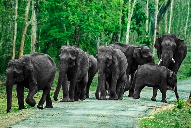 Top 5 National Parks of Karnataka