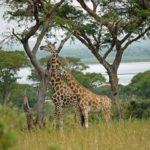 How to Have a Fun-Filled Family Safari in Uganda