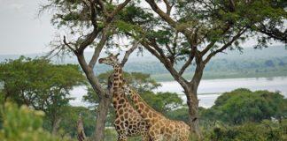 family safari in Uganda