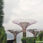 When to Visit Gardens in Singapore : The Most Beautiful Time