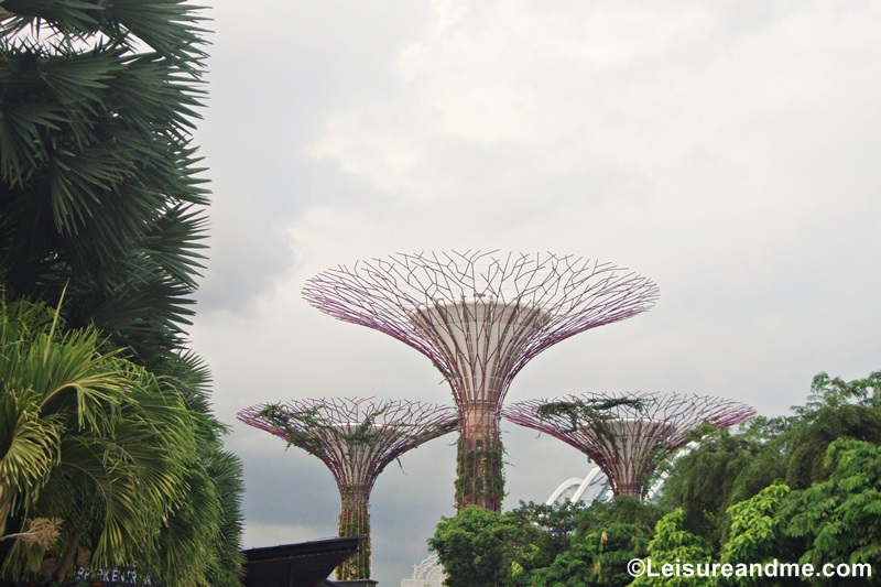 When to Visit Gardens in Singapore