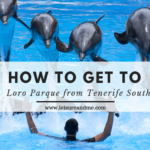 How to get to Loro Parque from Tenerife South?