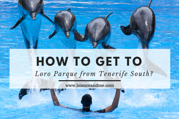 How to get to Loro Parque from Tenerife South