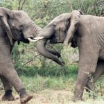 10 Reasons to Visit the Kruger National Park