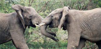 Reasons to visit the Kruger National Park