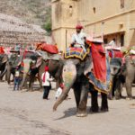 Why Elephant Rides Should Stop — Find an Elephant Sanctuary Instead