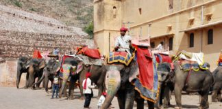 Why Elephant Rides Should Stop