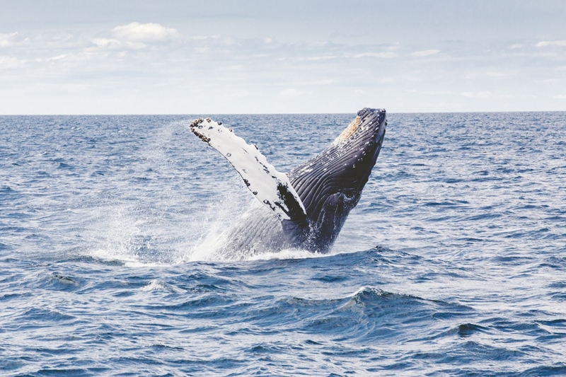 Best Places To Go For Whale Watching