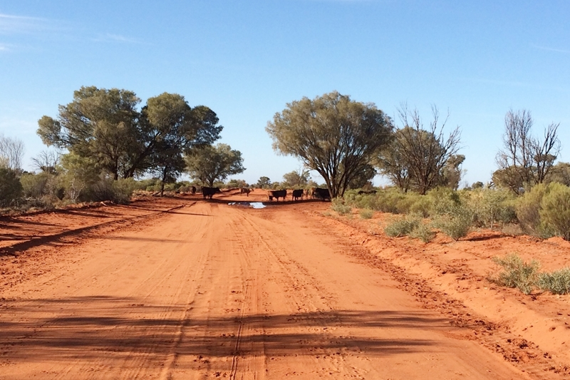 Uluru travel tips