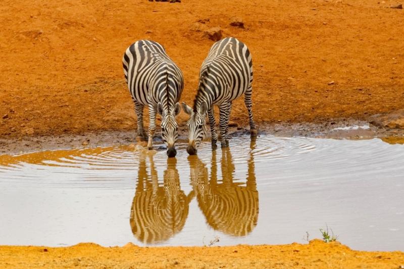 Kenya Safari Holiday Destination