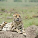 8 Reasons Why Kenya Remains an Epic Safari Holiday Destination