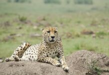 Kenya Safari Holiday Destination